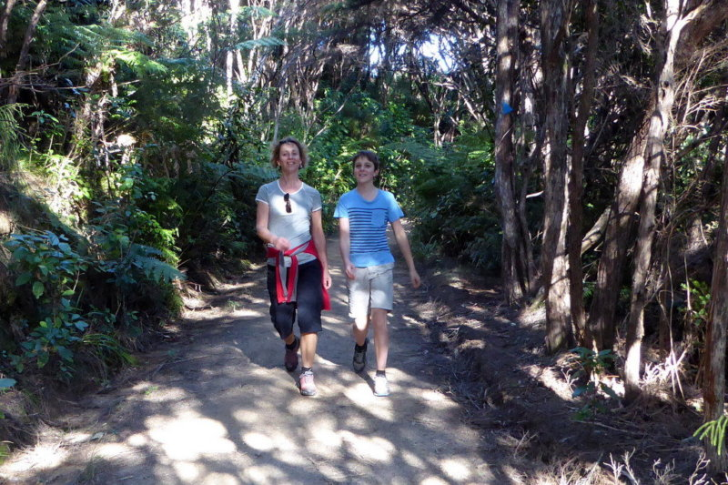walking on the abel tasman track
